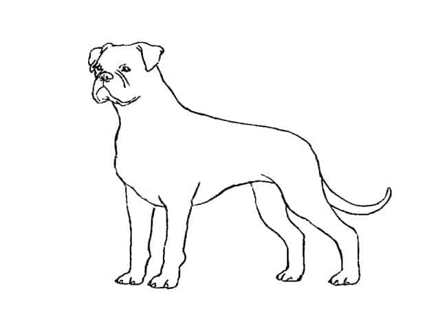 how to draw a boxer step by step how to draw boxer step by step sports pop culture free step step by draw boxer a to how