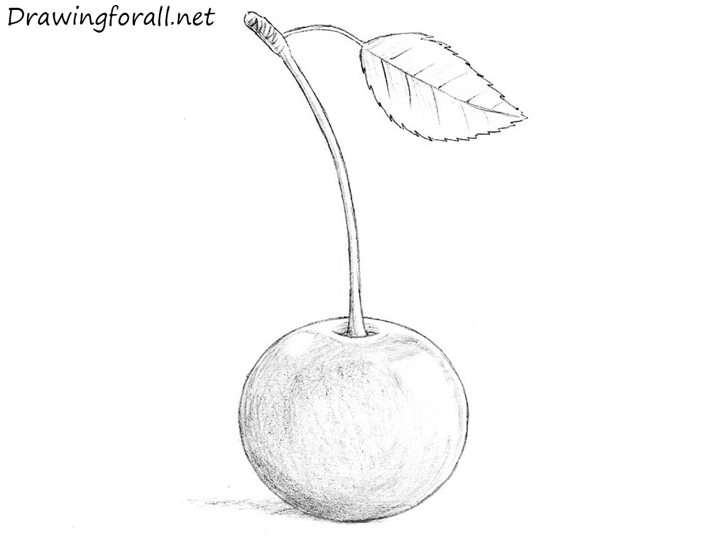 how to draw a cherry download premium illustration of three hand drawn fresh cherry a draw to how