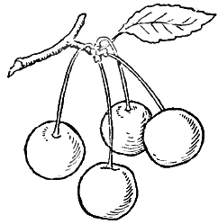 how to draw a cherry how to draw cherries step by step cherries drawing for kids draw a how cherry to