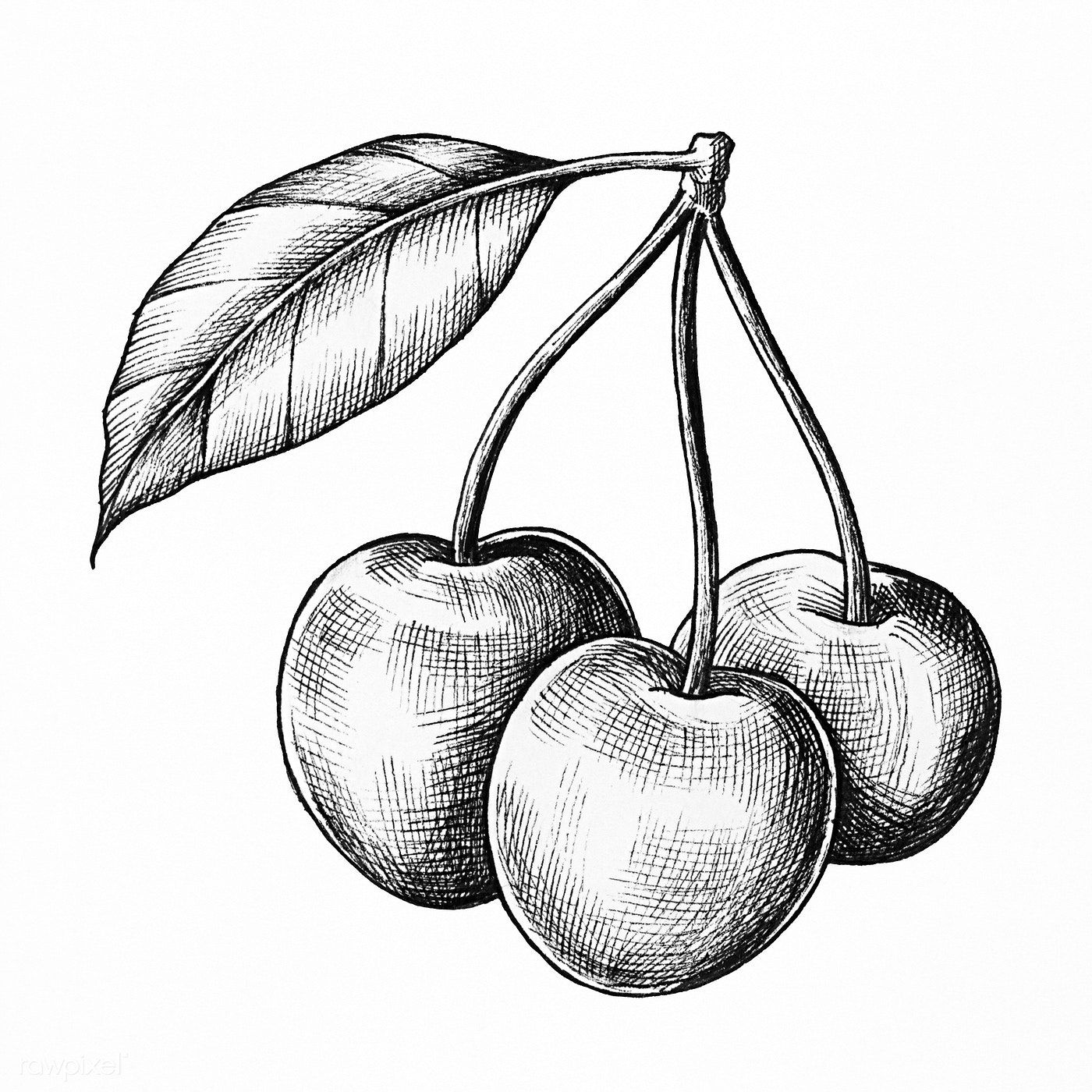 how to draw a cherry how to draw cherries step by step drawing tutorials to how a cherry draw