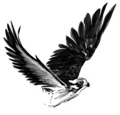 how to draw a falcon falcon by david burkart tattoos tatuaje de halcón draw a to falcon how