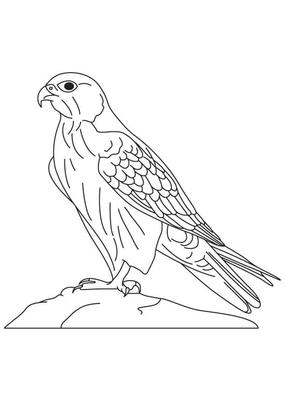 how to draw a falcon how to draw a falcon easy to a draw how falcon