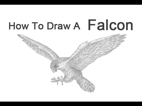 how to draw a falcon how to draw a falcon with pen and ink a draw how falcon to