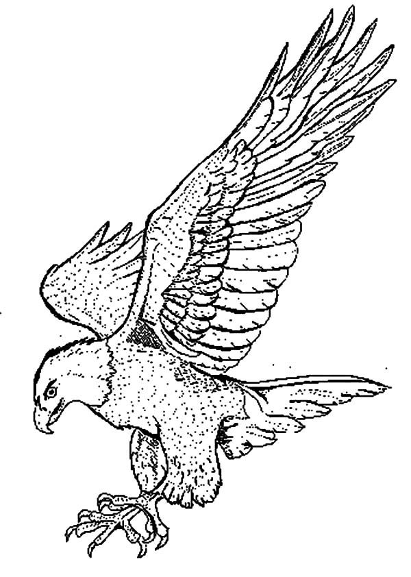 how to draw a falcon how to draw a peregrine falcon step by step drawing how falcon to draw a