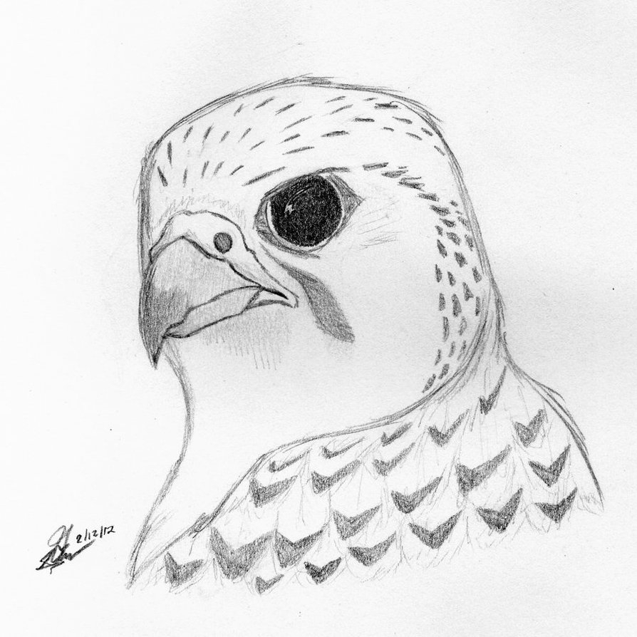 how to draw a falcon how to draw a peregrine falcon youtube falcon draw a to how