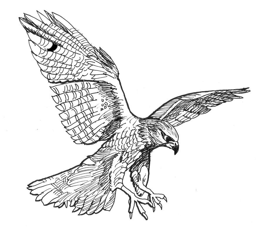 how to draw a falcon peregrine falcon by unusualworlds falcon drawing falcon draw falcon to a how