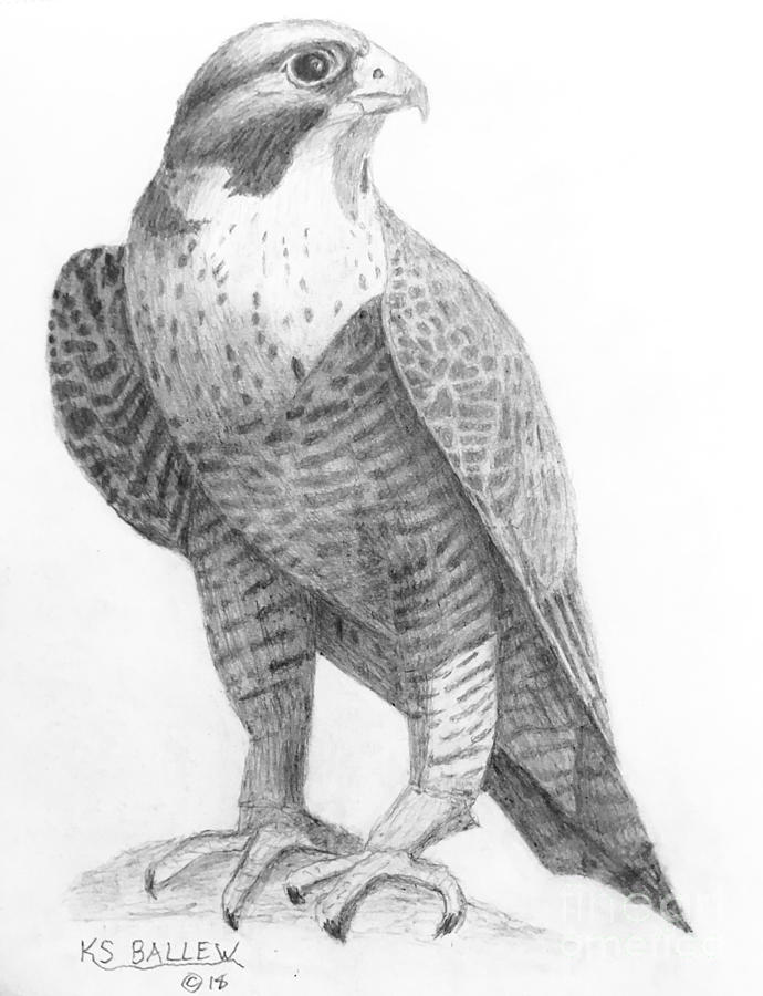 how to draw a falcon peregrine falcon drawing at getdrawings free download to a draw how falcon
