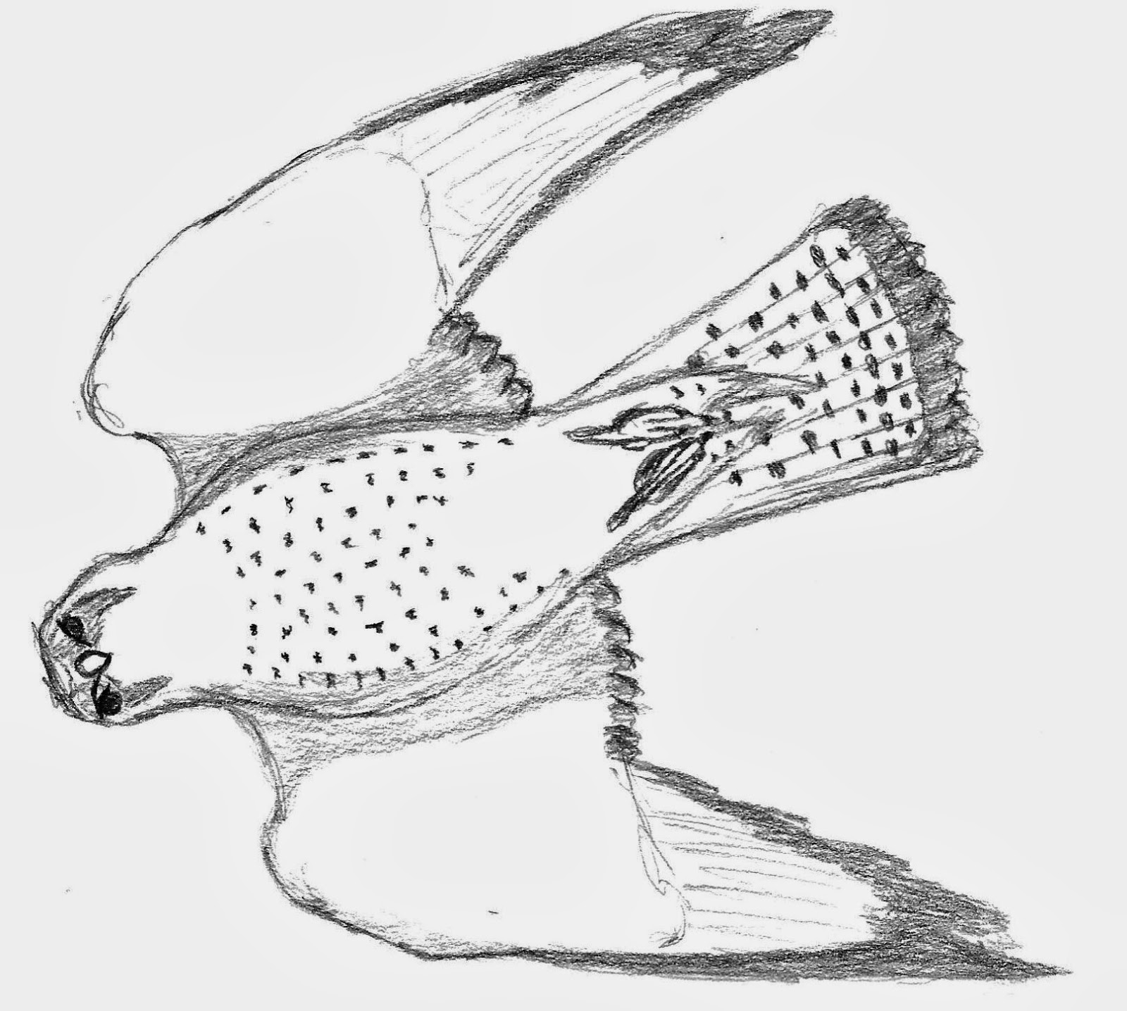 how to draw a falcon peregrine falcon drawing free download on clipartmag to falcon how draw a
