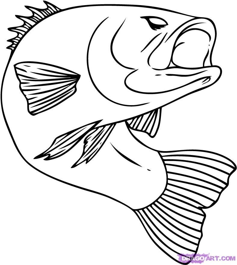 how to draw a fish bluegill fish drawing lesson exploring nature a how fish to draw