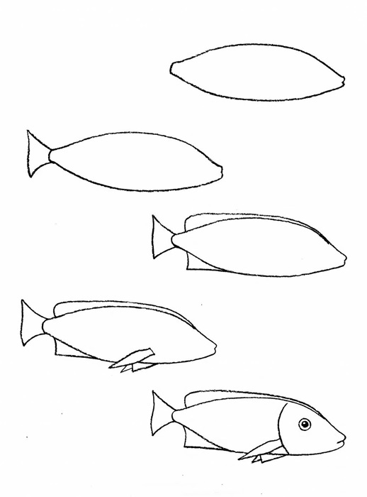 how to draw a fish drawing clownfish how fish to draw a