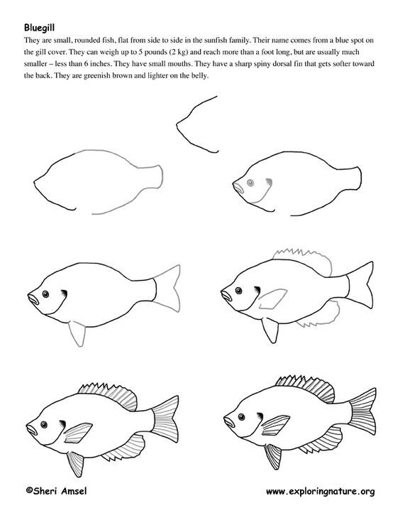 how to draw a fish how to draw a fish for kids drawingforallnet fish how a draw to