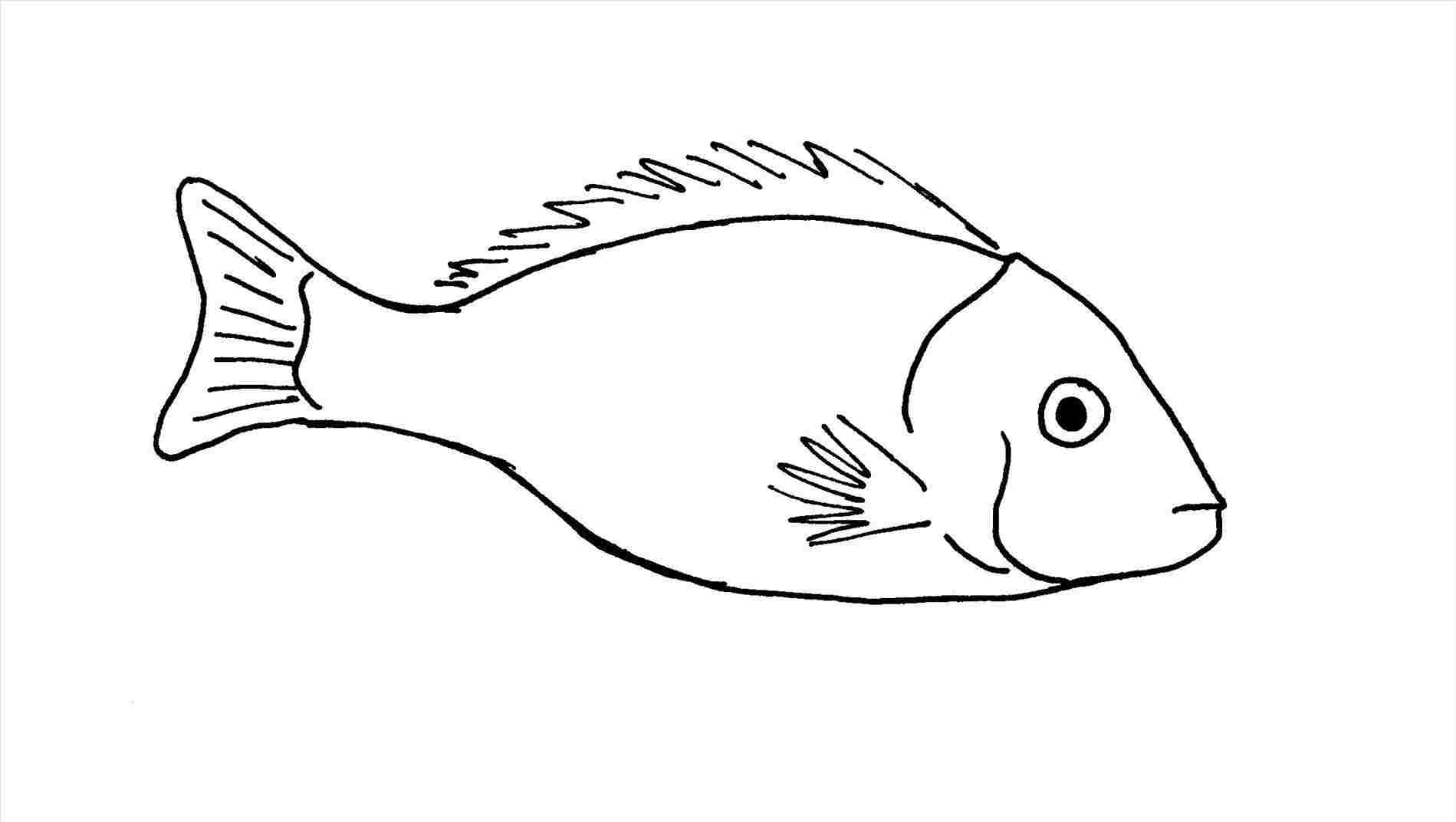how to draw a fish how to draw a fish how to draw a seahorse with simple a how to fish draw