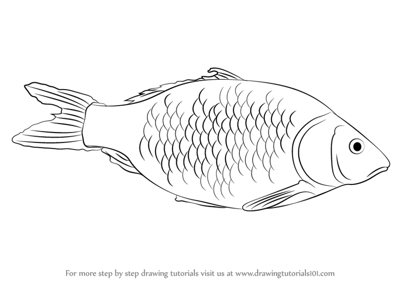 how to draw a fish how to draw worksheets for the young artist printable how draw fish a to how
