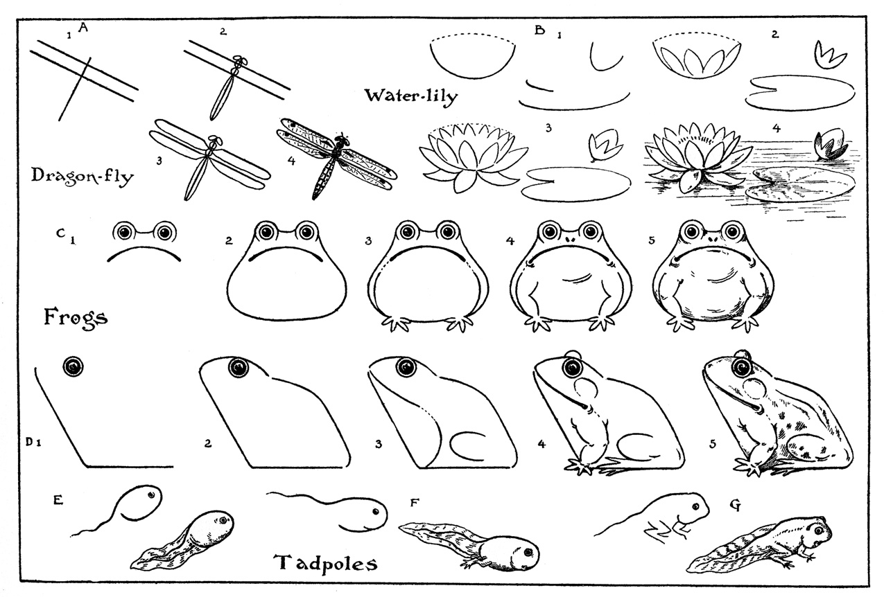 how to draw a frog easy frogs step by step drawing at getdrawings free download frog a to easy how draw