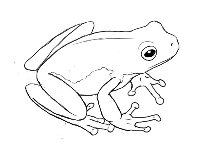 how to draw a frog easy how to draw a frog on lily pad step by step drawing draw how a easy frog to