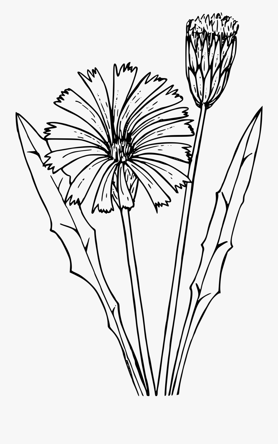 how to draw a goldenrod flower goldenrod flower drawing at getdrawings free download goldenrod how draw flower a to