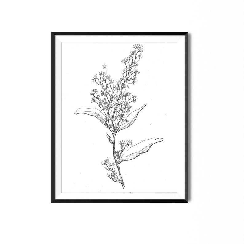 how to draw a goldenrod flower goldenrod flower drawing at getdrawings free download goldenrod to flower how a draw