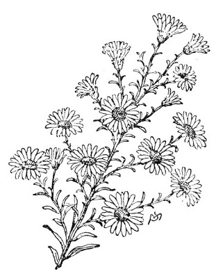 how to draw a goldenrod flower kentucky drawing at getdrawings free download to draw a goldenrod how flower