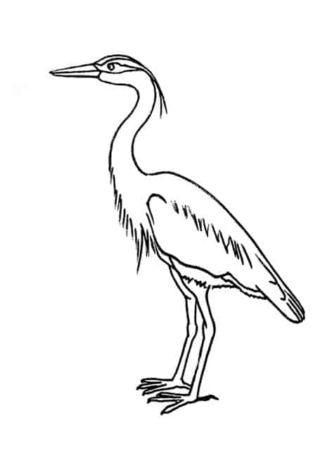 how to draw a heron art landscape heron in flight  google search line art draw how heron to a