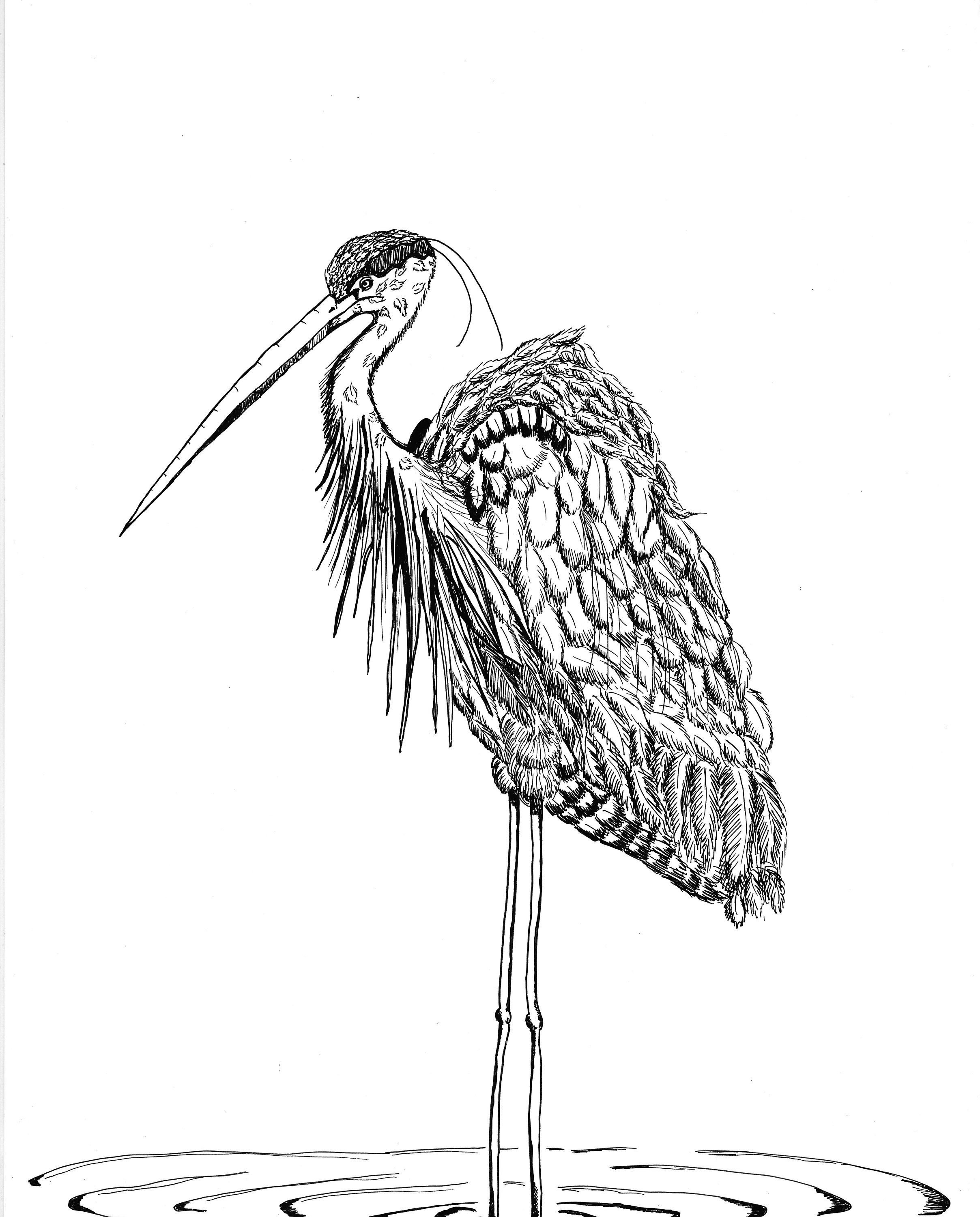 how to draw a heron black and white animal print blue heron illustration heron to how draw a