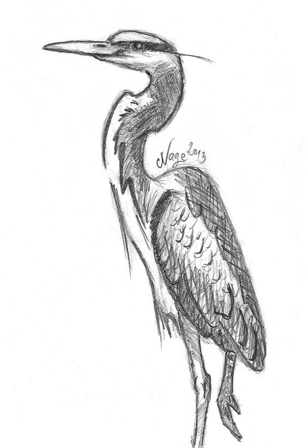 how to draw a heron drawing practice 3 heron by nagini chan on deviantart to how a draw heron