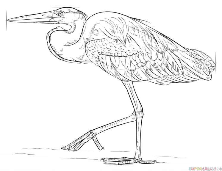 how to draw a heron drawing the great blue heron bird drawings animal draw heron a how to