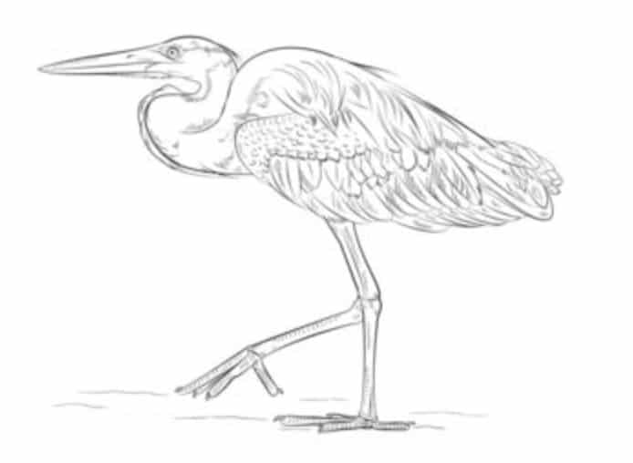 how to draw a heron google heron art black paper drawing bird drawings to heron draw a how