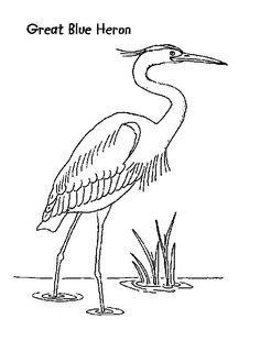 how to draw a heron great blue heron coloring page bird drawings 3d drawing a to heron how draw