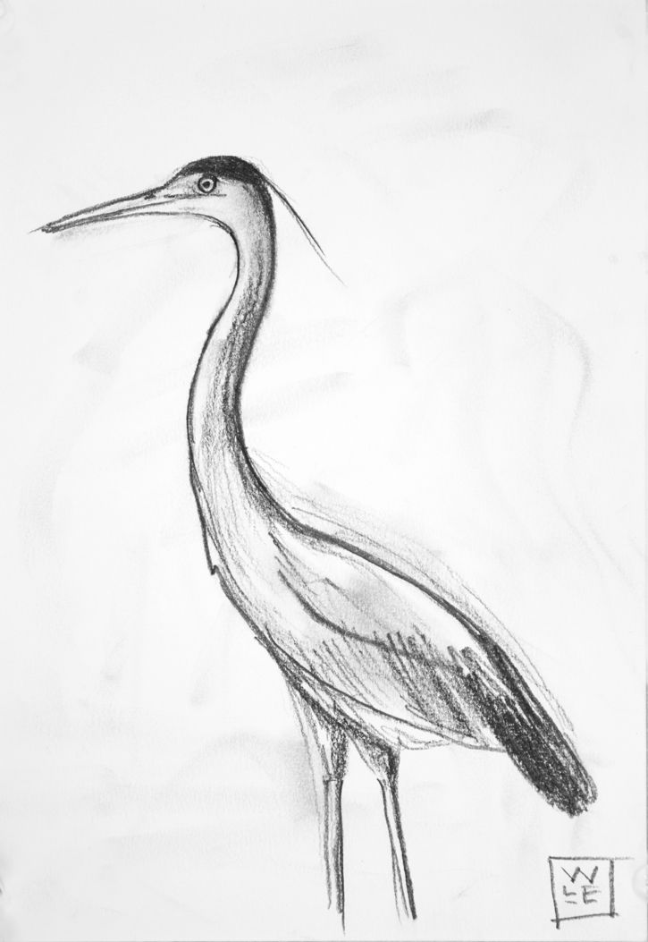 how to draw a heron grey common heron illustration drawing engraving ink line how to a draw heron