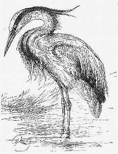 how to draw a heron how to draw a blue heron  yahoo image search results in to heron a how draw