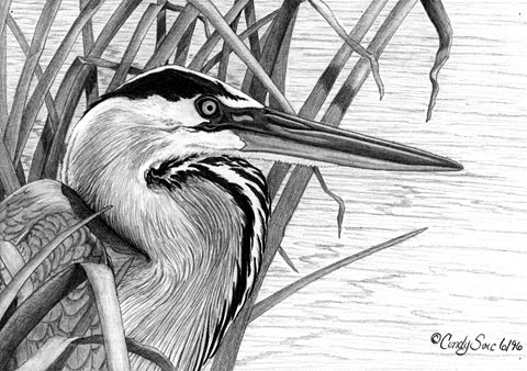 how to draw a heron how to draw a great blue heron step by step drawing a draw how to heron