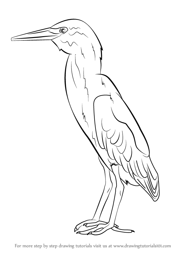how to draw a heron how to draw a great blue heron step by step drawing a to draw heron how