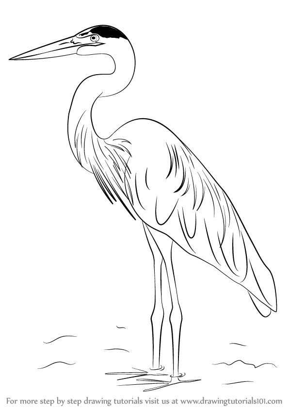 how to draw a heron how to draw a grey heron step by step easy animals 2 draw to a heron how draw