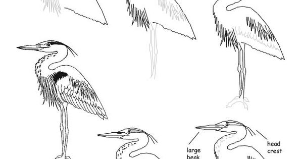 how to draw a heron how to draw a heron step by step drawing guide by to heron draw a how