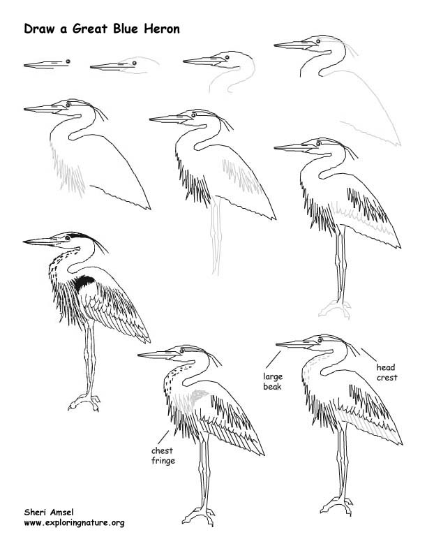 how to draw a heron learn how to draw a great blue heron birds step by step how to heron a draw