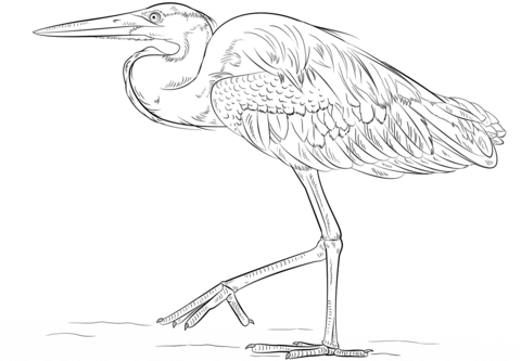 how to draw a heron learn how to draw a green heron birds step by step draw how heron to a