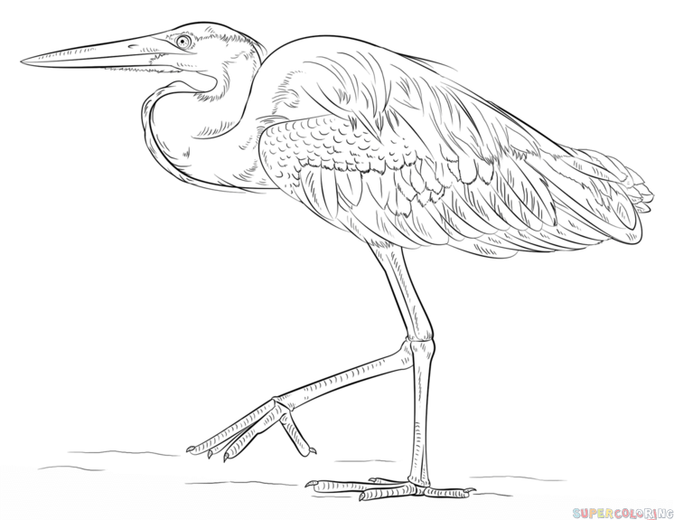 how to draw a heron pin by nita claise on egrets and herons pinterest heron how a draw to