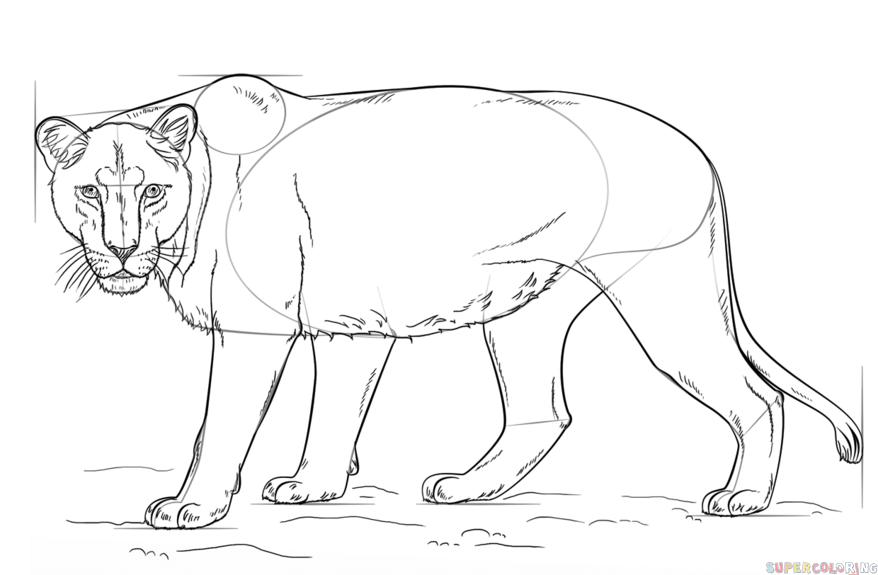 how to draw a lioness how to draw a lioness step by step drawing tutorials how a to draw lioness