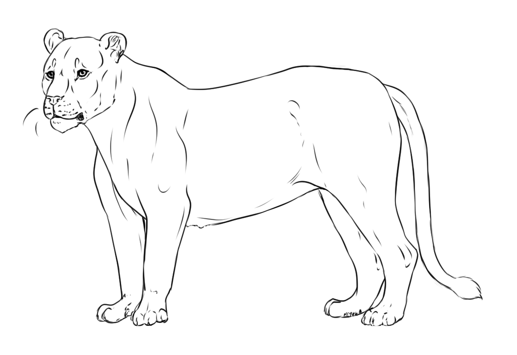 how to draw a lioness how to draw worksheets for the young artist how to draw a a how lioness draw to