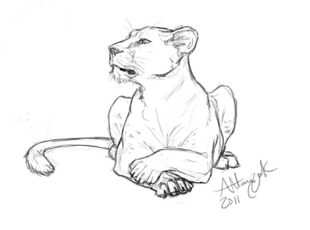 how to draw a lioness lioness drawing at getdrawings free download draw lioness a to how