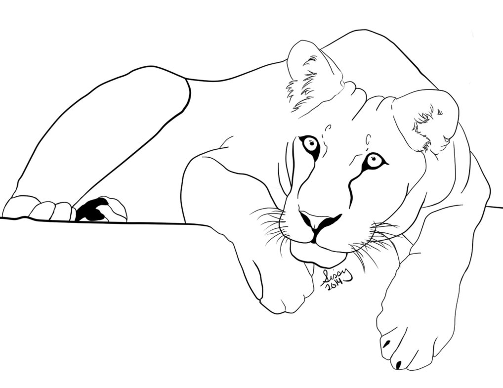 how to draw a lioness lioness drawing at getdrawings free download how a lioness to draw