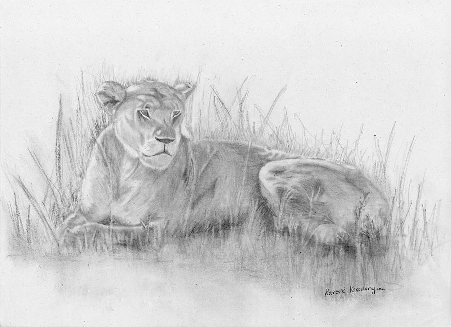 how to draw a lioness lioness drawing at getdrawings free download to how draw a lioness