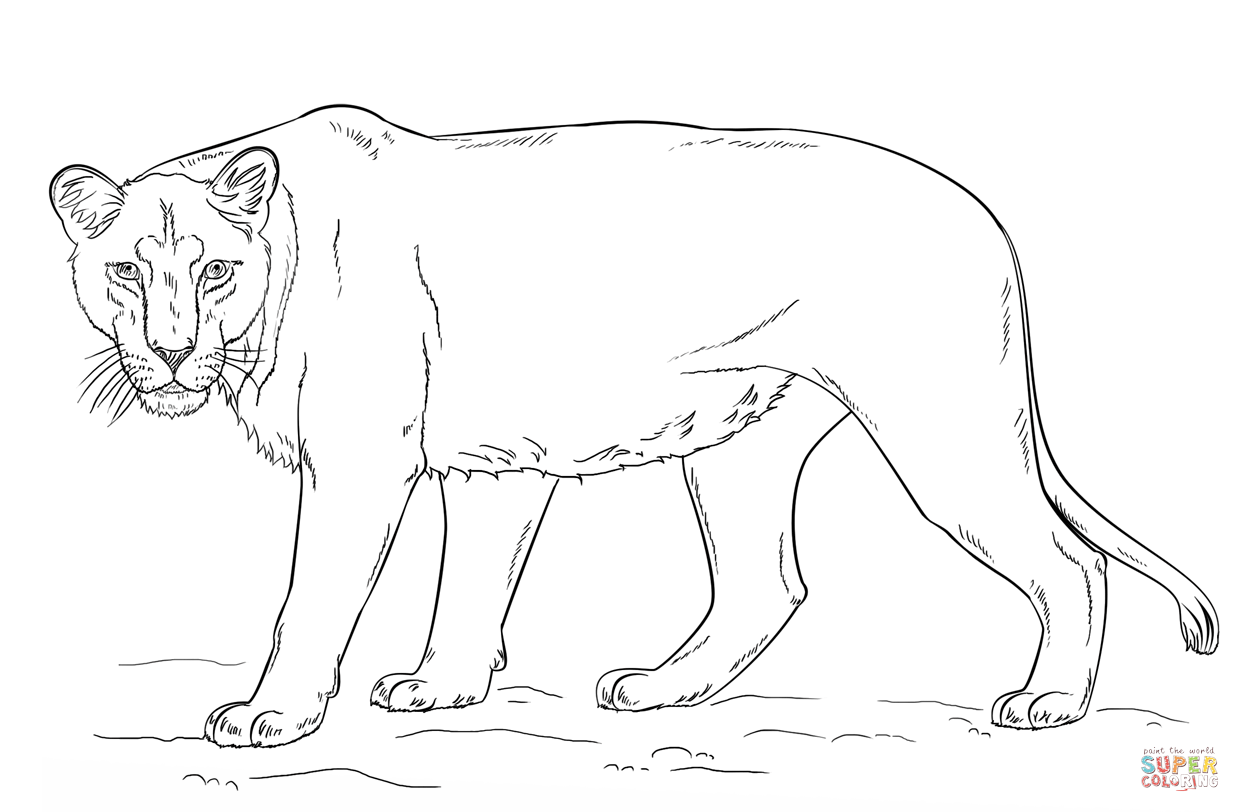 how to draw a lioness lioness lineart by meykka on deviantart a to draw lioness how