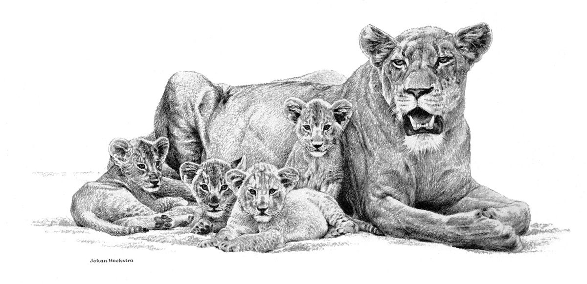 how to draw a lioness pin on inkworthy bestiary lioness draw to a how