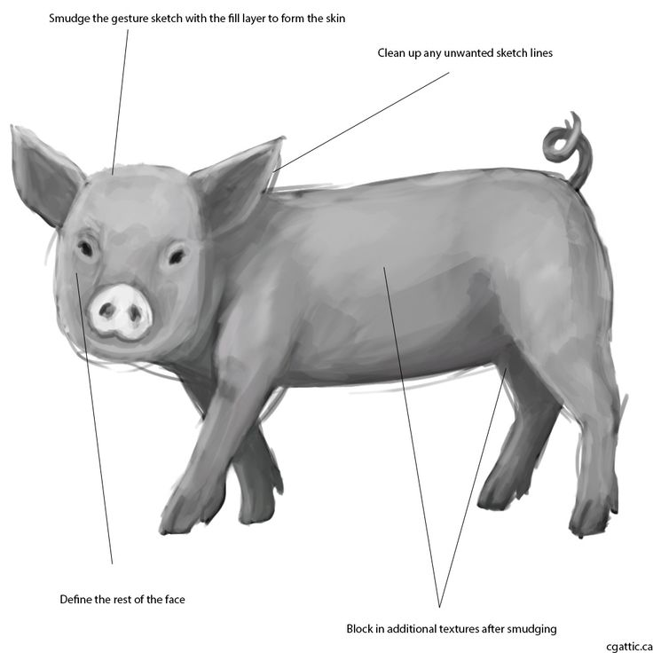 how to draw a pig 10 best images about pig on pinterest cartoon make new how draw pig to a