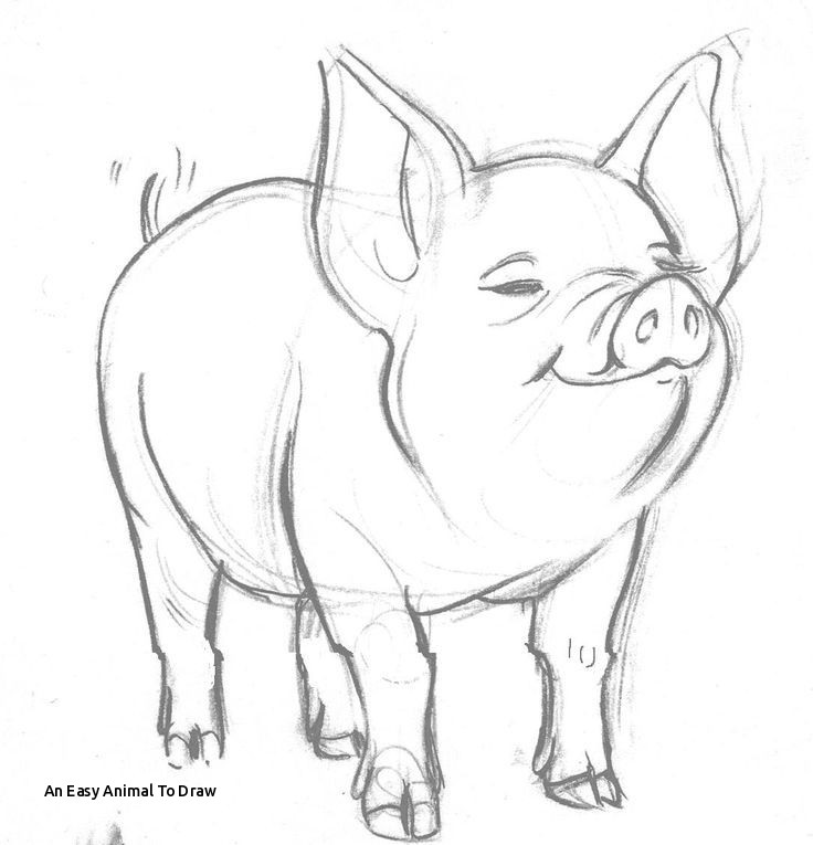 how to draw a pig learn to draw daddy pig step by step how to draw pig a