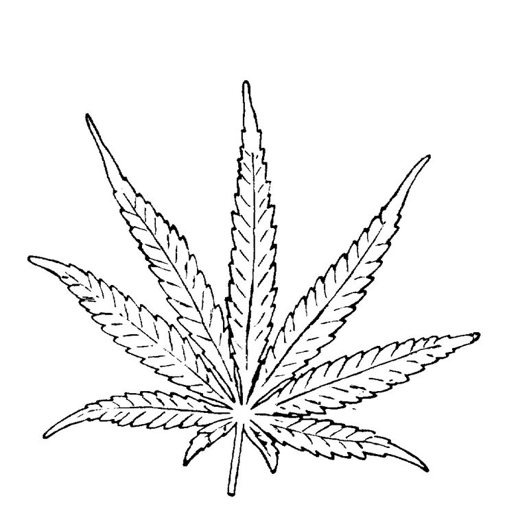 how to draw a potleaf marijuana leaf coloring pages clip art library how a draw to potleaf