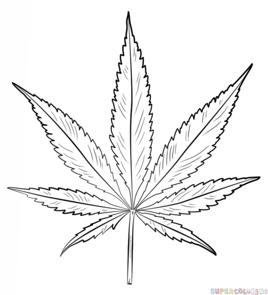 how to draw a potleaf pot leaf drawing free download on clipartmag draw a how potleaf to