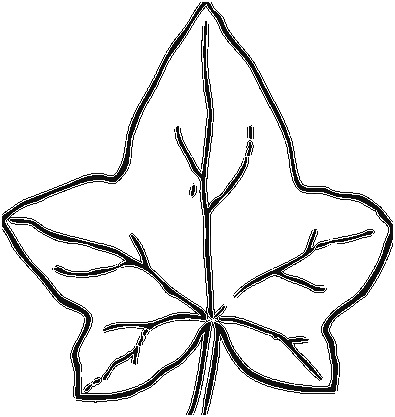 how to draw a pumpkin leaf coloring book flowers outline pumpkin leaf clipart a leaf to draw pumpkin how