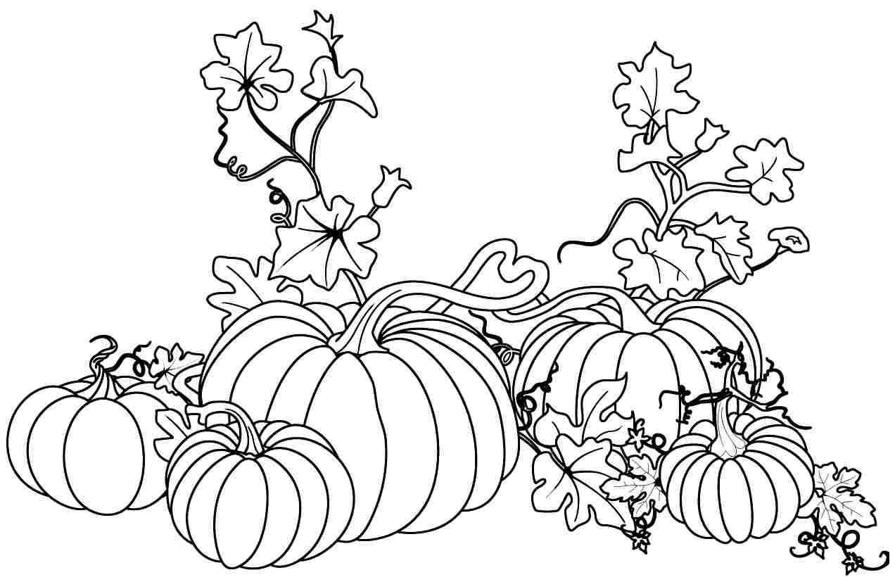 how to draw a pumpkin leaf pumpkin leaf drawing at getdrawings free download a leaf pumpkin draw to how